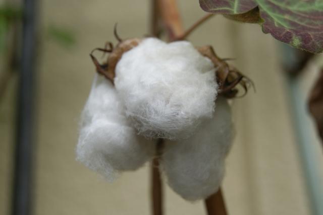 ダウンジャケットの中綿は潰れても復活させることができる?